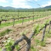 Women and wine: Mother's Day wineries to visit in Oregon
